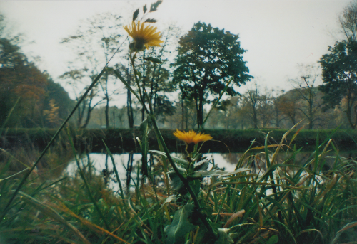 Blume02